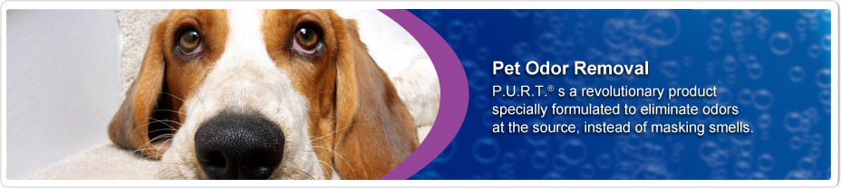 Pet Urine Odour Removal - Chem-Dry Wicklow Wexford
